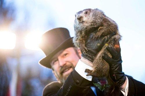 10 Famous Groundhogs Besides Punxsutawney Phil