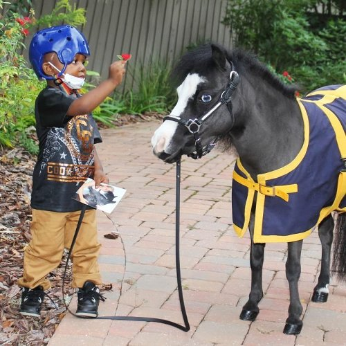 The Therapy Miniature Horse With a Magic Touch