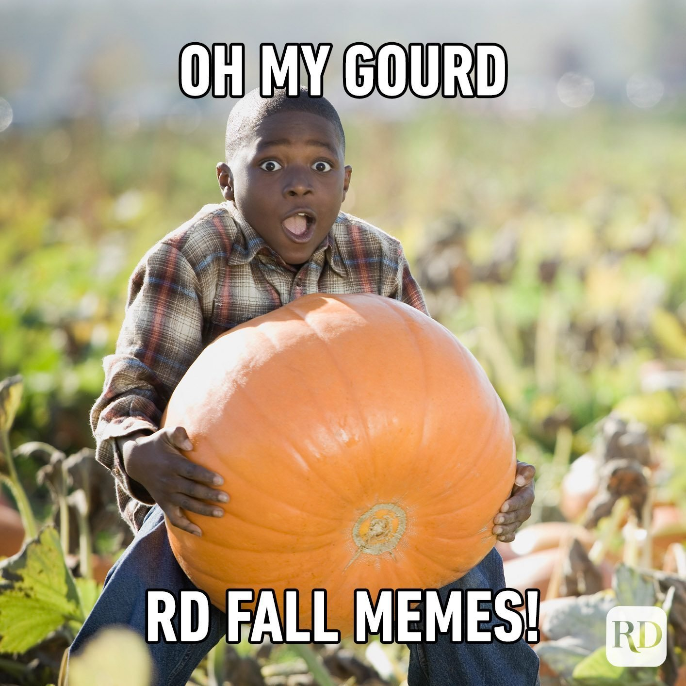 28 Hilarious Fall Memes You'll Love