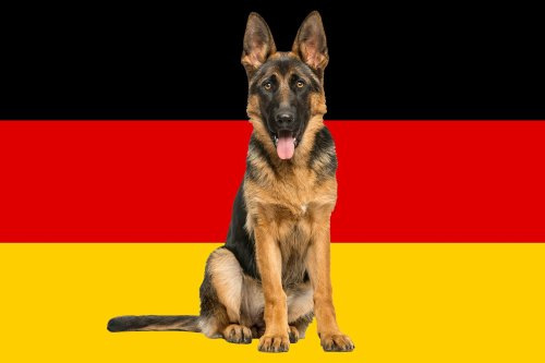 13 Classic German Dog Breeds That Make Great Companions