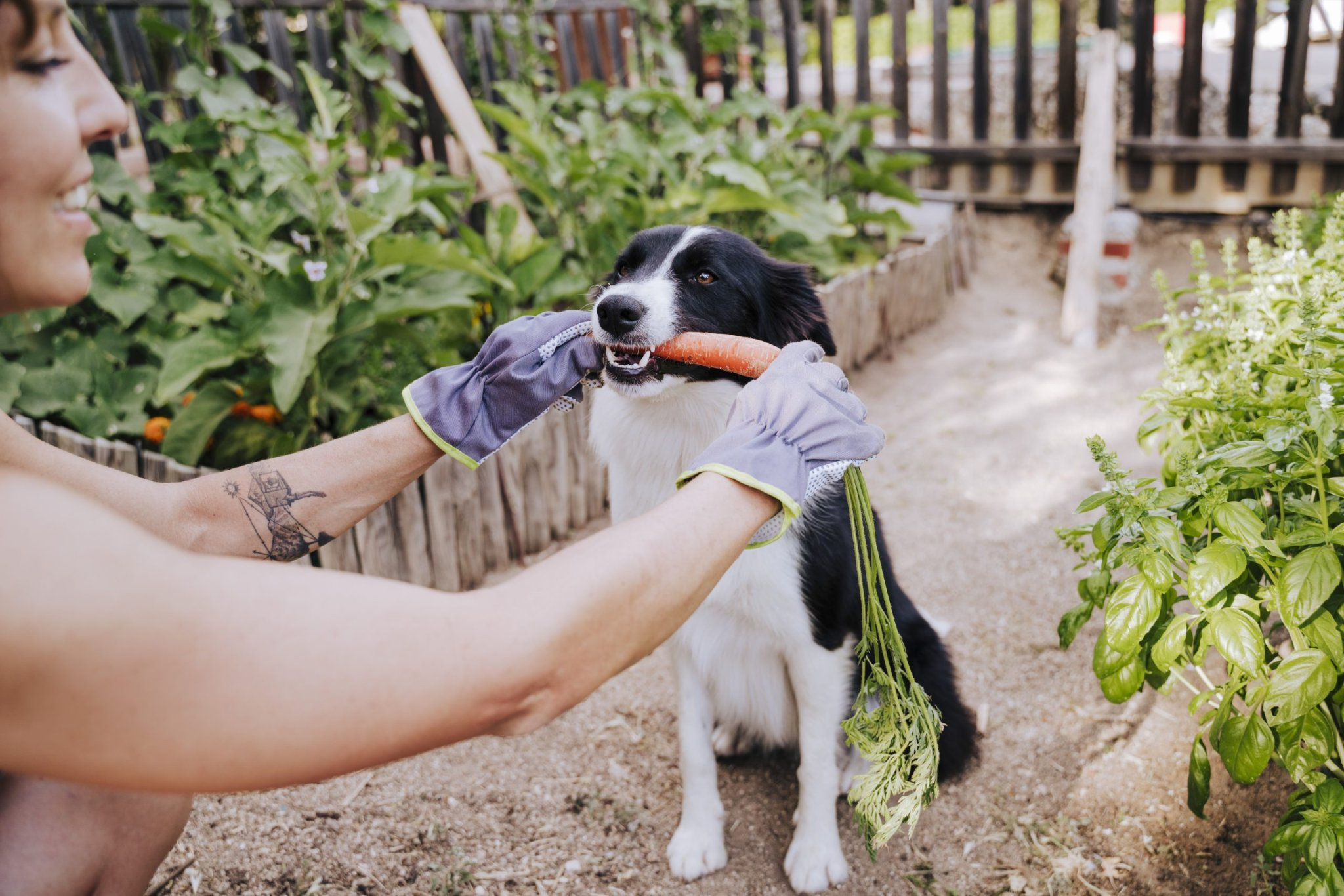 The Fruits and Vegetables Dogs Can (and Can't) Eat