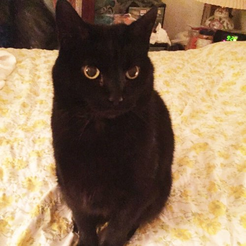 This Guardian Angel Cat Helped Save His Owner from a Life-Threatening Seizure