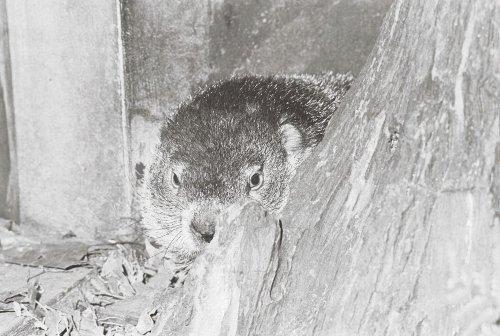 10 Most Memorable Groundhog Mishaps on Groundhog Day