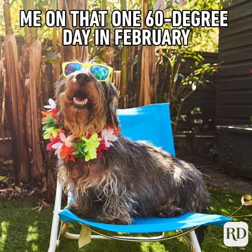 45 Hilarious Dog Memes You'll Laugh at Every Time