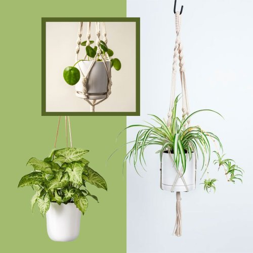 15 Indoor Hanging Plants That Will Liven Up Your Home