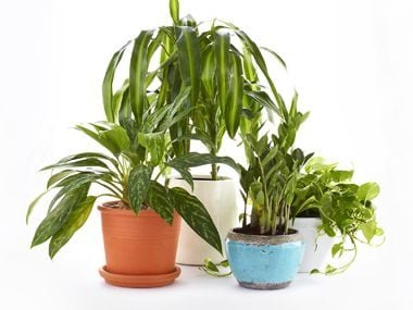 Choosing Air-Purifying Plants: A Room-By-Room Guide