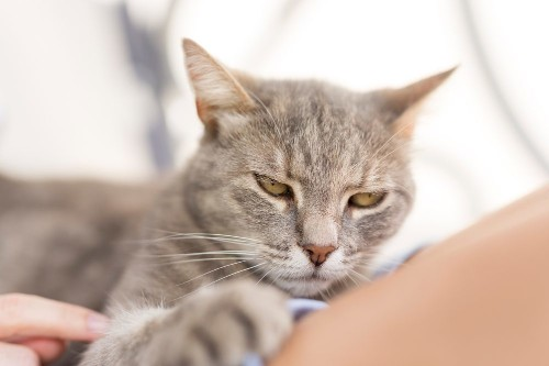 15 Signs Your Cat Is Secretly Mad at You