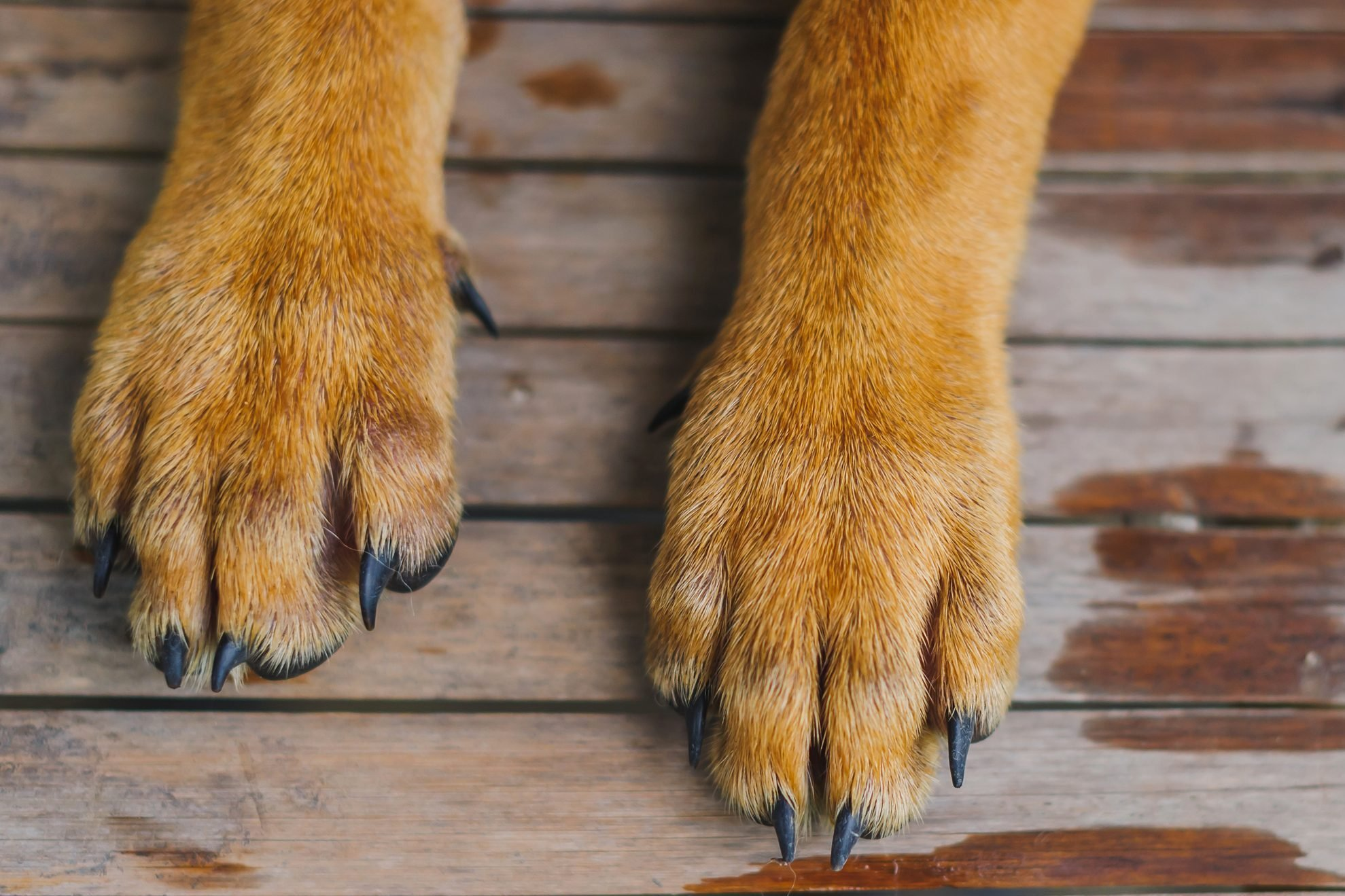 Here's Why Your Dog's Paws Smell Like Corn Chips