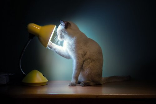 Are Cats Nocturnal?