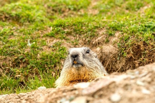 Here's Why We Celebrate Groundhog Day in the First Place
