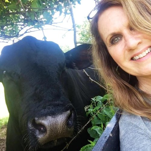 How a 2,500-Pound Bull Became the Neighborhood Therapist