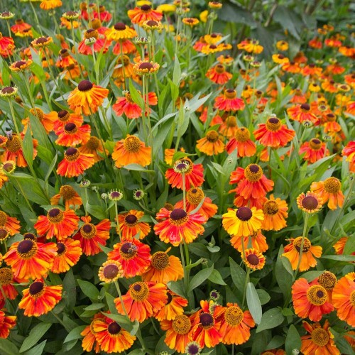 10 Inexpensive Plants That Will Make Your Garden Pop