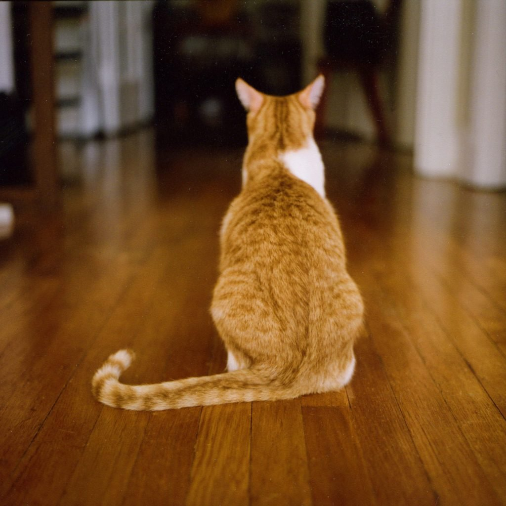 Why Do Cats Like to Sit in Squares?