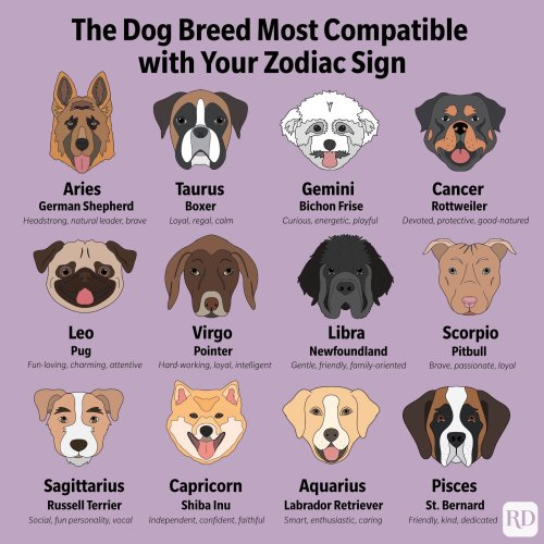 This Is the Dog Breed That's Most Compatible with Your Zodiac Sign