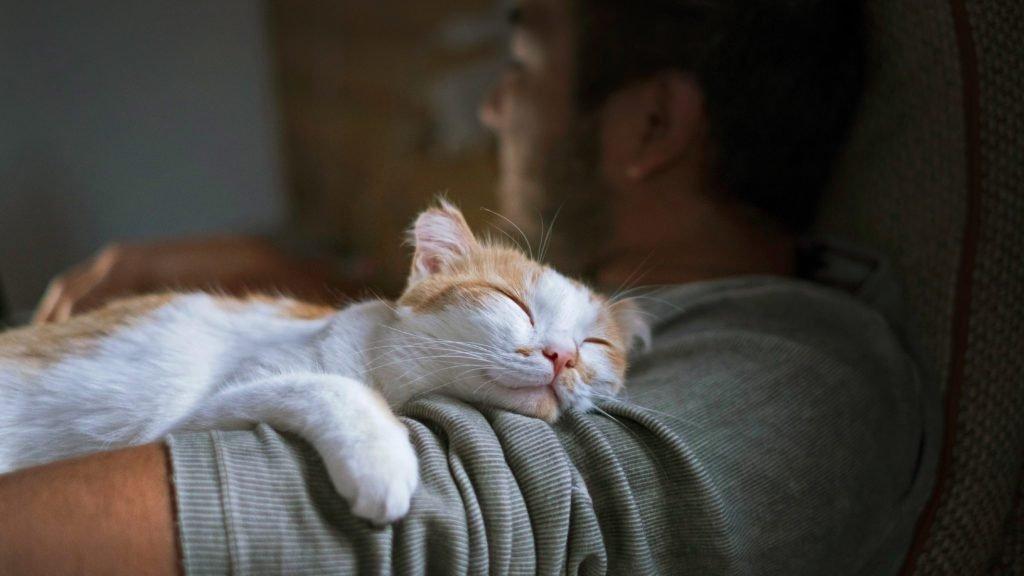 Why Do Cats Sleep on You?