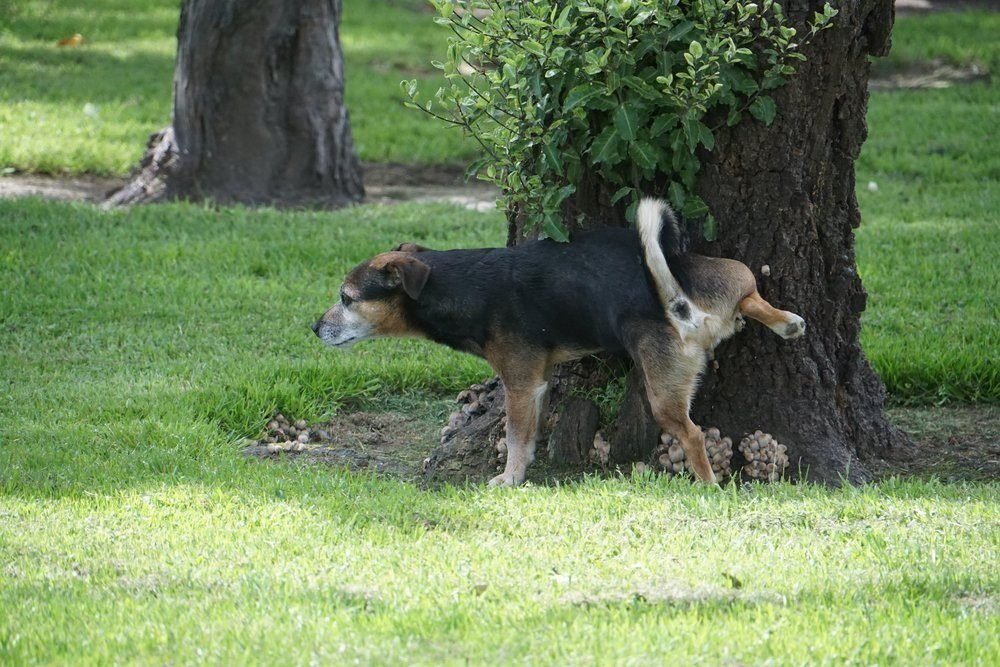 Here's Why Dogs Kick Up Your Lawn After They Pee