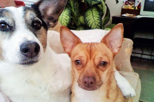The Story of an Adopted Pet Dog Who Adopted His Own Pet Dog