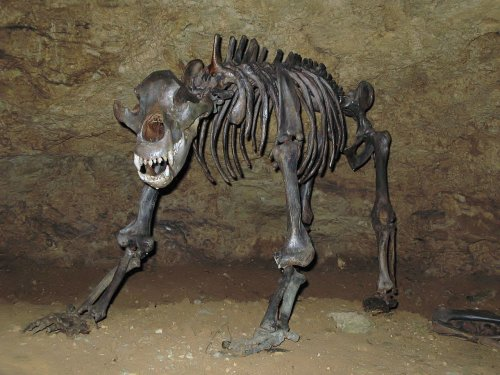 New Sequence Rewrites Evolutionary History of Cave Bears