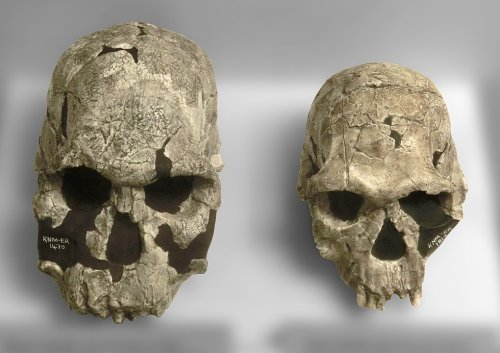 Five Human Species You May Not Know About
