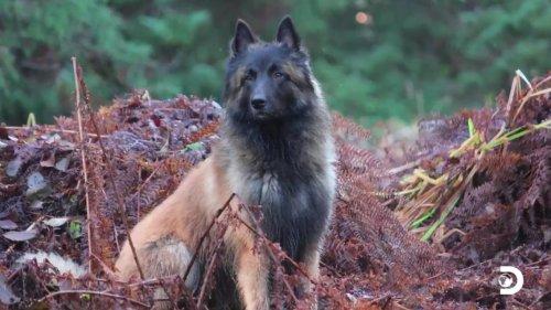 How did Mr Cupcake the dog on Alaskan Bush die?