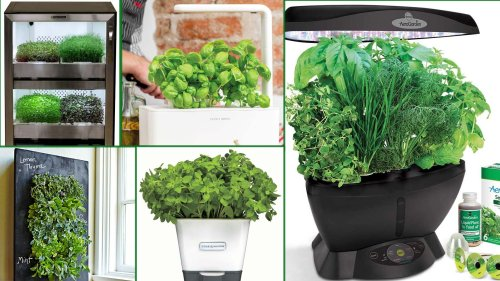 Indoor Herb Growing Kits Even Die-Hard Plant Killers Can't Kill