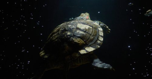 U.S. Space Force Finds 30 Kilos of Cocaine While Looking for Sea Turtles