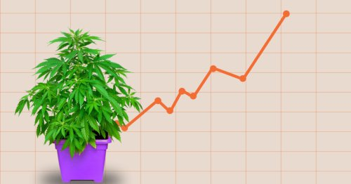 Poll Shows 69 Percent of Americans Favor Legal Weed, a New Record High