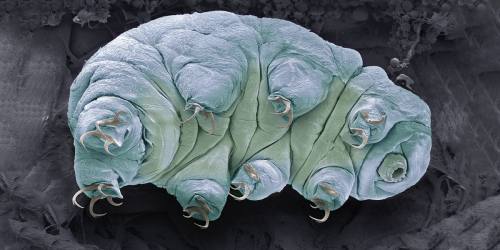 Tardigrades and Other Extremophiles