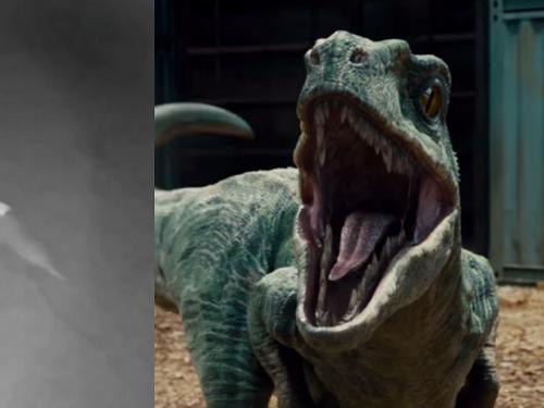Florida Woman Convinced Security Camera Caught 'Baby Dinosaur' Running Through Her Yard