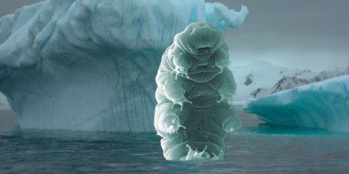 Dead – yes, dead – tardigrade found beneath Antarctica