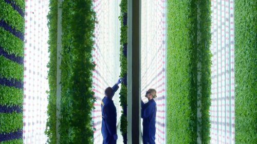 Vertical farming: disrupting agriculture