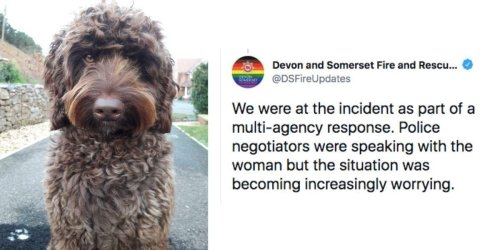 Digby the therapy dog saved the life of a woman who was about to jump off a bridge