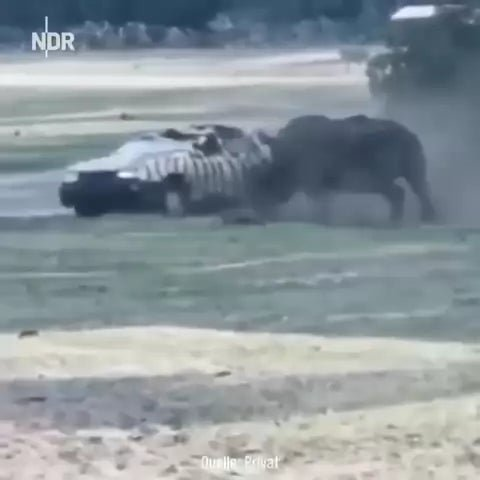 r/Whatcouldgowrong - WCGR blocking the path of a wild rhinoceros