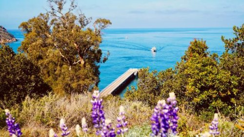 Guide to West Coast Road Trips