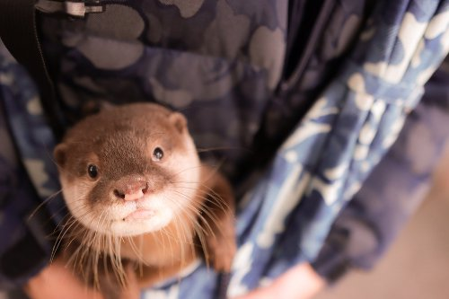 A Wisconsin Zoo Just Welcomed These Otter-ly Adorable Triplets