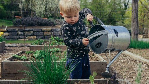 7 Kid-Friendly Vegetables & Herbs to Grow at Home