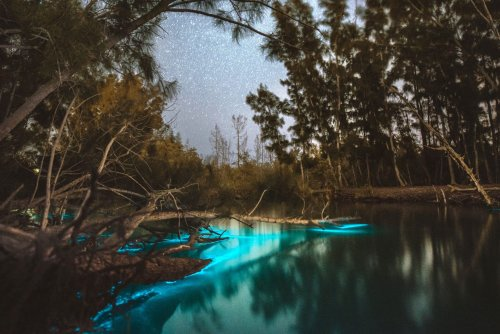 A Florida Kayak Excursion That's Like Paddling through the Milky Way