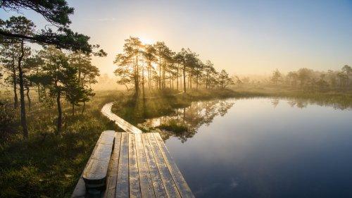 Estland-Urlaub: Entdeckungen zwischen Moor und Meer