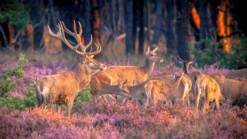 Top 8 Holland Nationalparks im Überblick (inkl. Bilder & Karte)