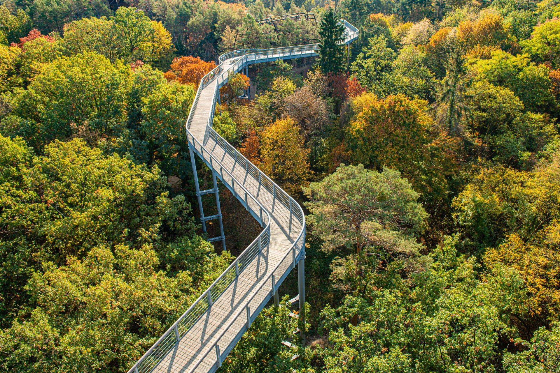 Top 12 Baumwipfelpfade in Deutschland - inkl. Karte & Bilder