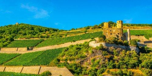 Top 6 Weinregionen in Deutschland - Der Weinguide für kommende Reisen