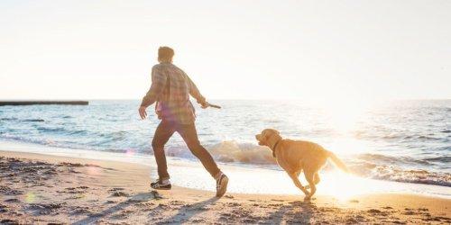 Die 10 besten Hundestrände in Holland - Das Paradies für eure Vierbeiner