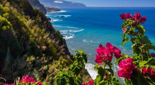 Beste Reisezeit Madeira - alle wichtigen Infos zum Klima vor Ort