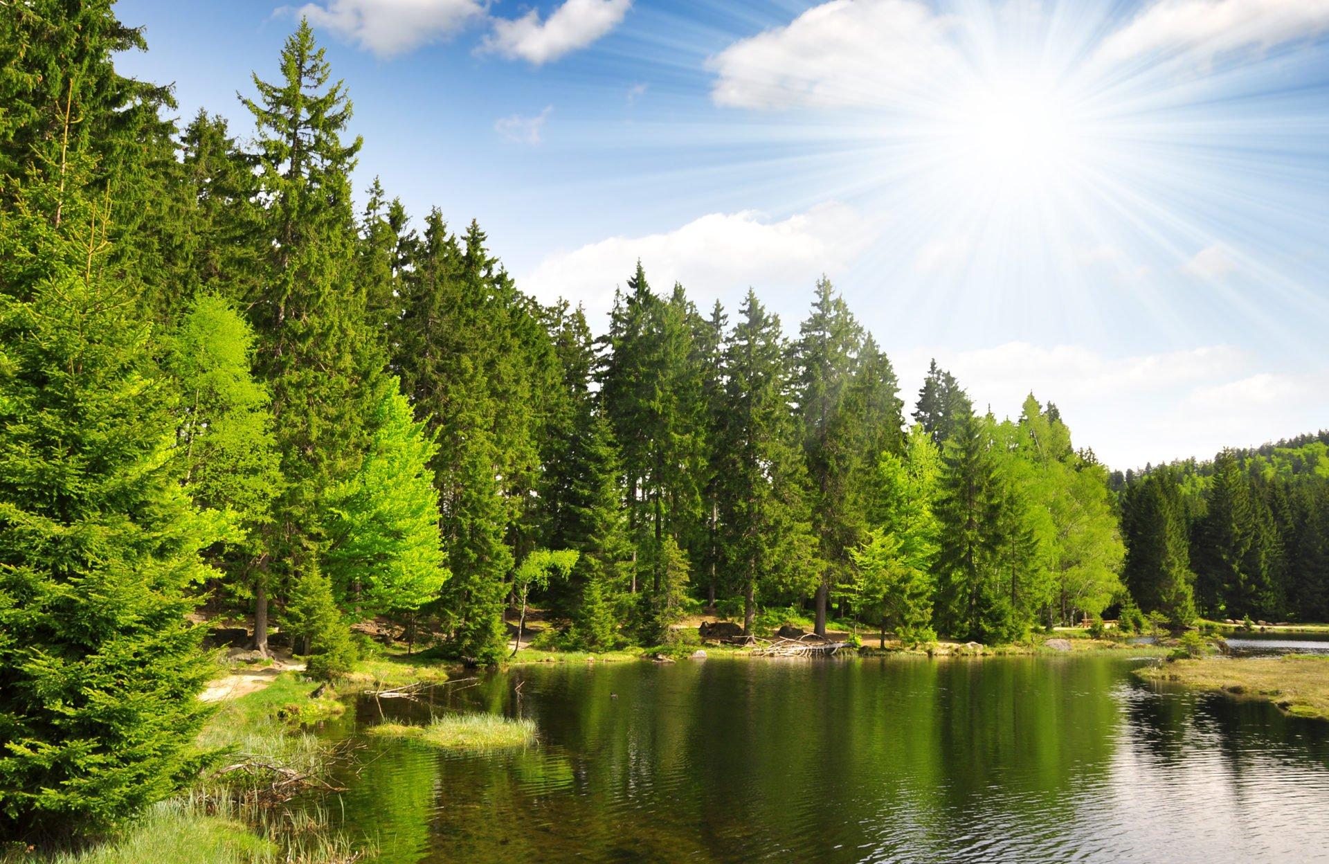 Bayerischer Wald - 16 spannende Infos für deinen Urlaub in Deutschland