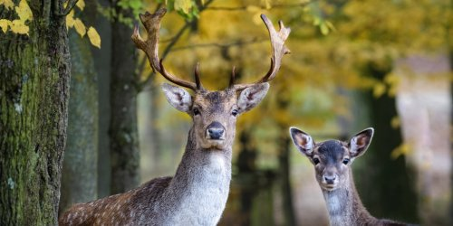 Die 10 schönsten Wildtierparks in Deutschland - Ausflug in die Natur