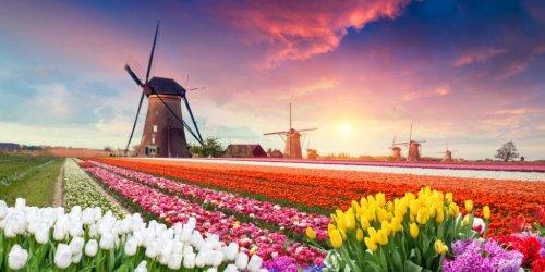 Die besten Ferienparks in Holland - Strandhäuser & Parks