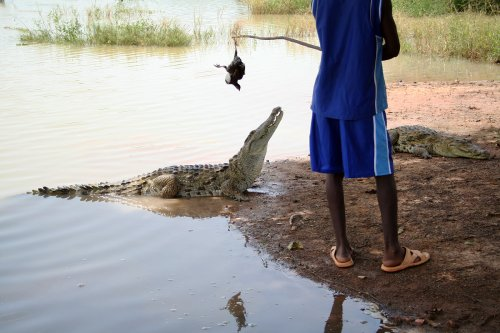 COVID-19 takes a bite out of Burkina Faso's cult of sacred crocodiles