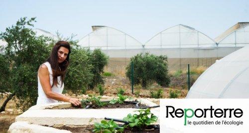 Au Liban, l'agroécologie pour survivre en temps de crise