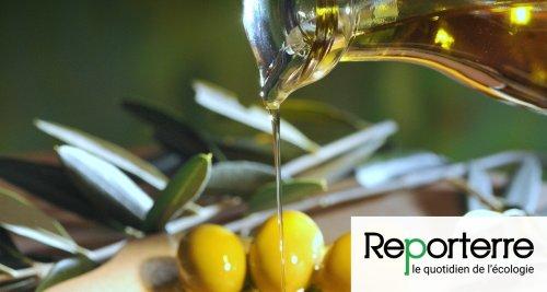 Huile d'olive : alerte à la fraude !
