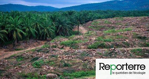 L'Europe largement responsable de la destruction des forêts tropicales